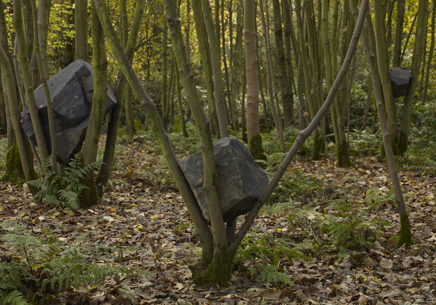 Andy Goldsworthy: Stone Coppice