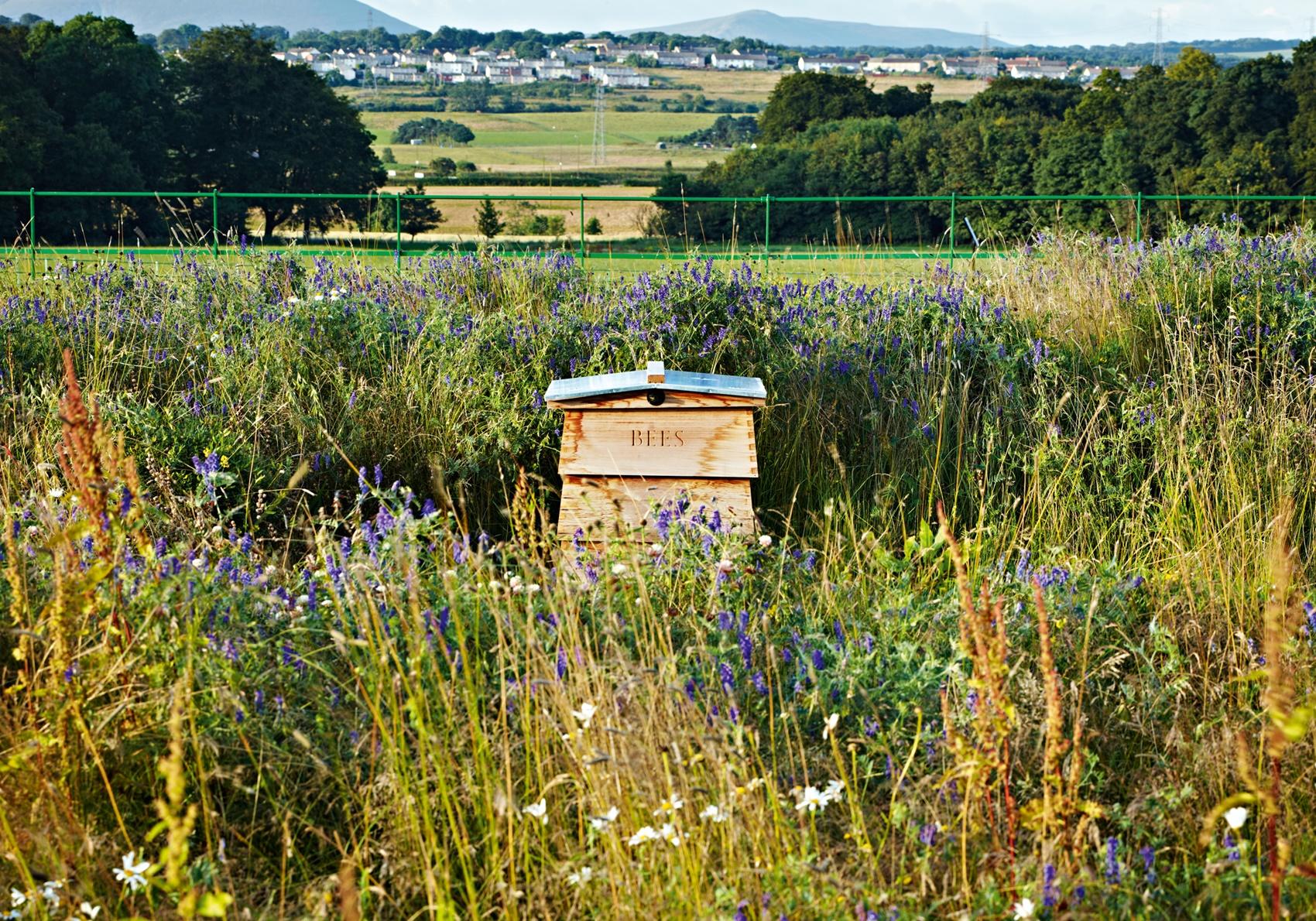 Ian Hamilton Finlay: Beehives