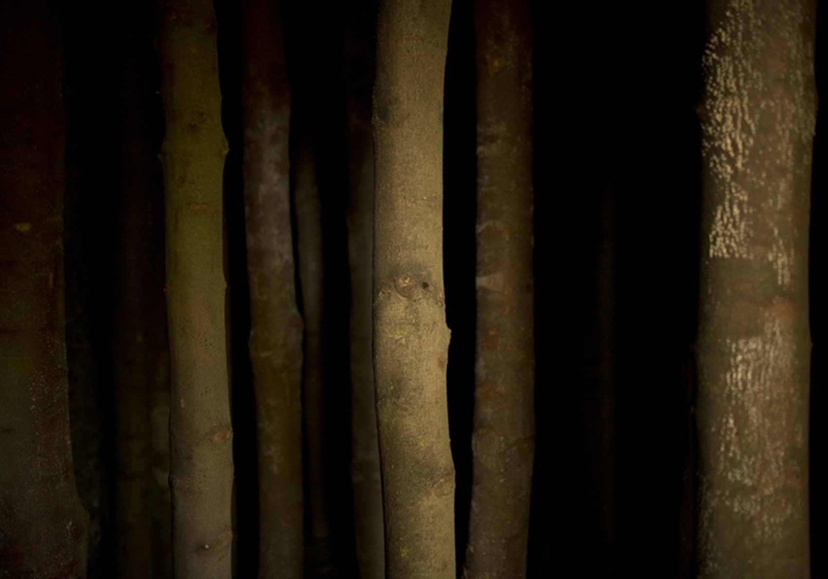 Andy Goldsworthy: Coppice Room